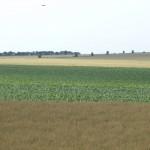 Agriculture_France_Provins-Champs de blé
