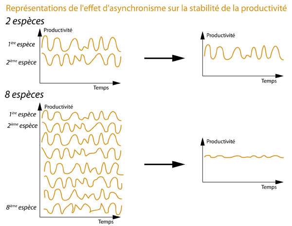 Asynchronisme dans la production de biomasse