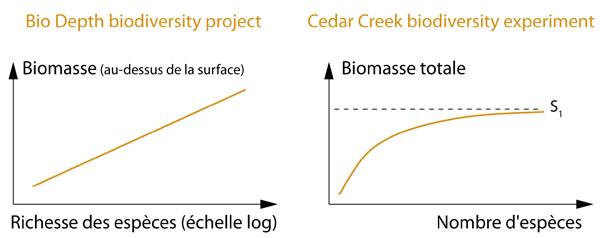 Résultats expériences de Cedar Creek et Bio Depth