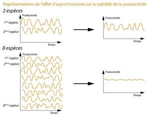Asynchronisme dans la production de biomasse
