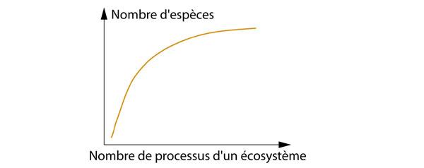 Relation entre le nombre d'espèces et nombre de processus