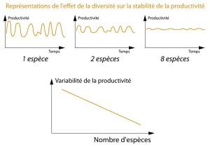 Stabilité production biomasse