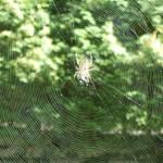Araignée et sa toile