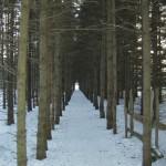 Allée d'arbres