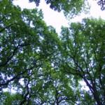Forêt-Écouen