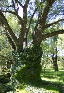 La captation du carbone par les arbres et la carboneutralité